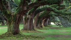 Oak-Alley-Plantation-3-1024x576